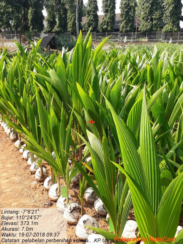 8000 Bibit Kelapa untuk Kelompok Tani di Kebumen