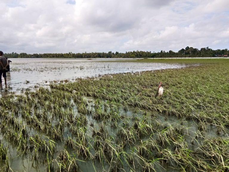 Lahan Diterjang Banjir, Petani di Landak Harus Segera Urus Klaim Asuransi