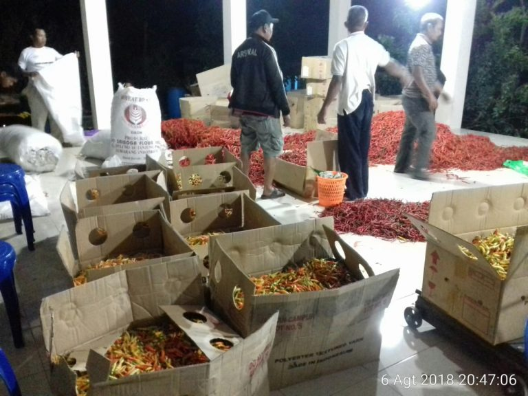 Transaksi Bangsal Pasca Panen Untungkan Petani Cabai