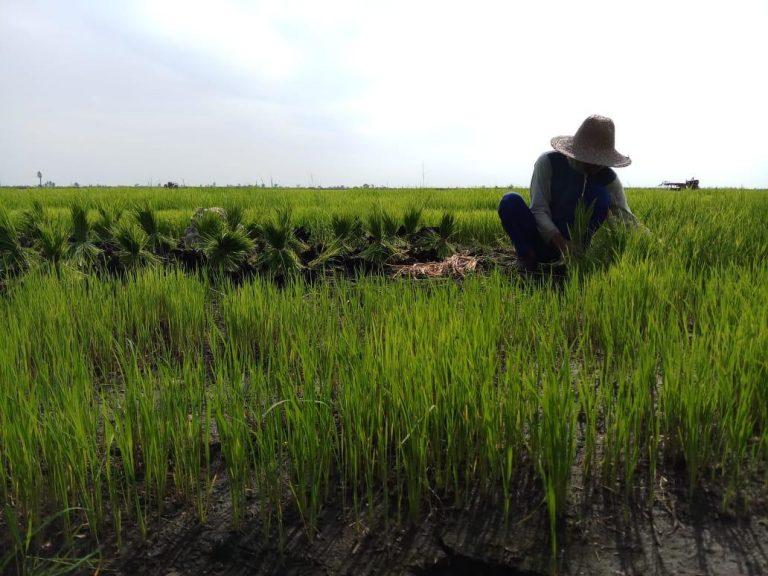HPS Ke-38, Momen Eksistensi Indonesia Dalam Optimasi Lahan Rawa