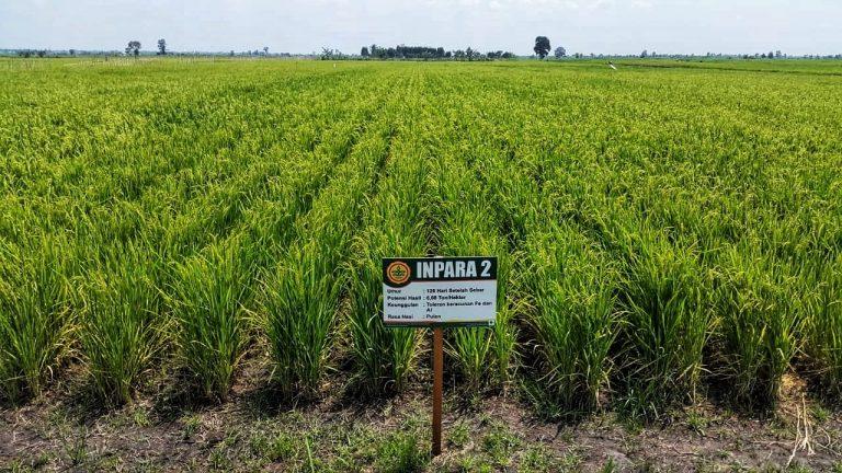 Jelang HPS ke-38, Kementan ungkap Teknologi untuk Sulap Rawa jadi Lahan Pertanian