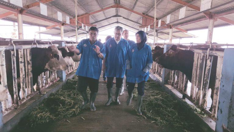 Dubes RI di Belgia Tengok Sapi Belgian Blue di Indonesia