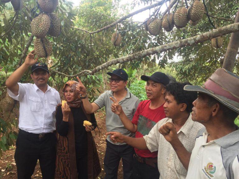 Pacu Daya Saing, Kementan-Banyumas Gelar Panen dan Kontes Durian Lokal