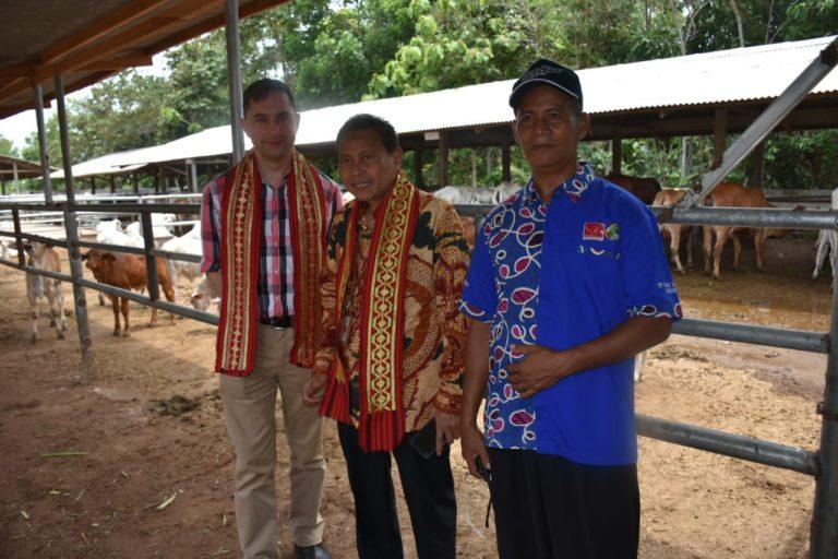 Berkat Upsus Siwab, Sebanyak 17.663 Ekor Sapi Lahir di Lampung Selatan