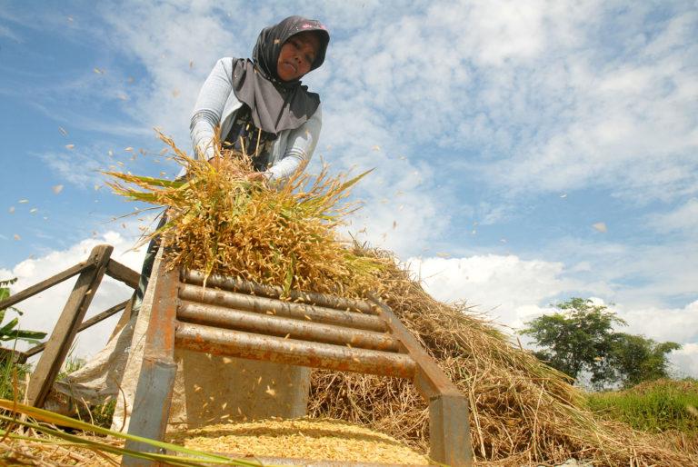 M Nasir Dorong Modernisasi Pertanian di Kabupaten Pelalawan