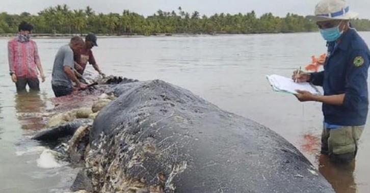 Gara-gara Limbah, Ridwan Kamil Prihatin Banyak Ikan Mati di Laut