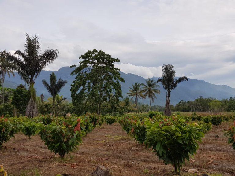 Indonesia Perluas Pasar Kakao di Uni Eropa