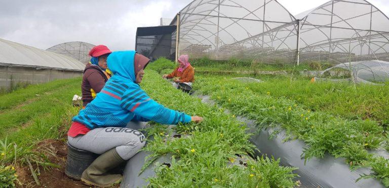 Kementan klaim PDB Sektor Pertanian terus Membaik