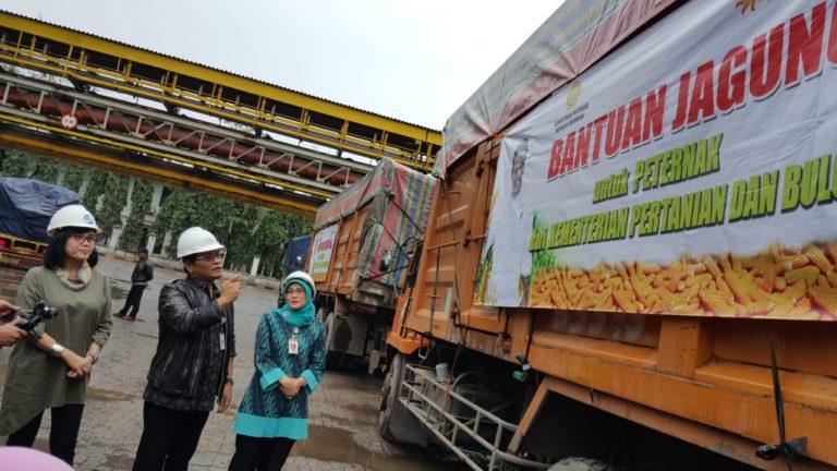 Kementan dan Bulog Distribusikan Jagung untuk Peternak Ayam Jawa Barat