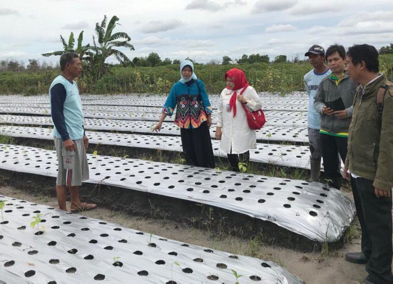 Pengendalian OPT Ramah Lingkungan pada Sayuran di Lahan Rawa