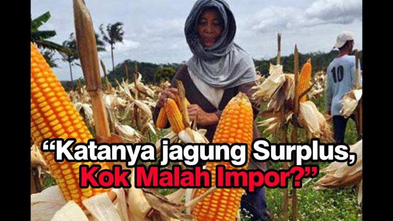 Tolak Impor Jagung, Petani di Sumut Minta Menko Perekonomian Pulang Kampung