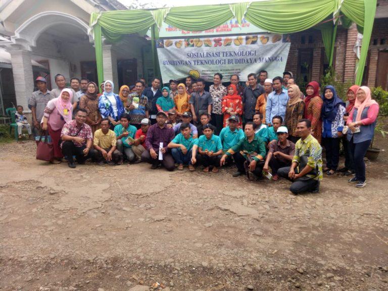 Petani Mangga Kabupaten Probolinggo Siap Mendukung Ekspor