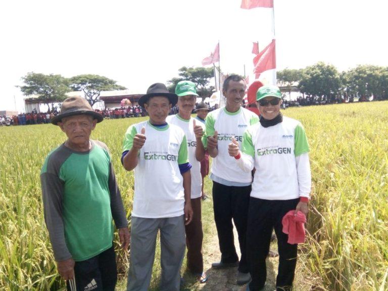Petani Indramayu Sukses Panen Raya Berkat Pupuk Cair Herbal