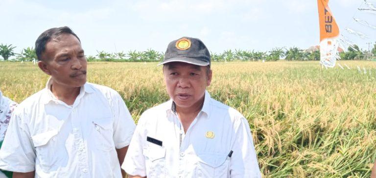 Pemkab Indramayu Anjurkan Petani Gunakan Pupuk Extragen