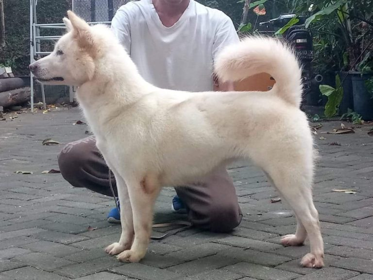 Kementan: Anjing dan Kucing Belum Terbukti Tularkan Covid-19