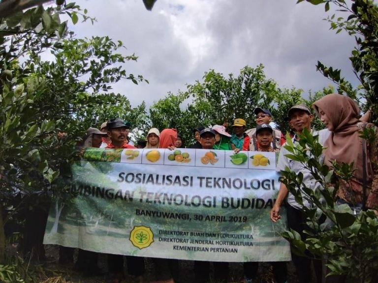 Bujangseta dan Sitara, Teknologi Peningkatan Produksi Mutu Jeruk