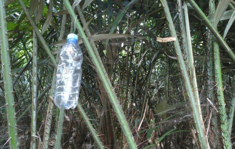 Pengendalian hama lalat buah pada pertanaman salak di Magelang