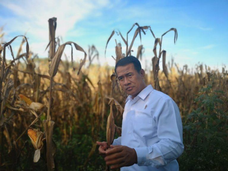 Survei Pilpres; Sosok Amran Sulaiman Dongkrak Elektabilitas Capres di Wilayah KTI