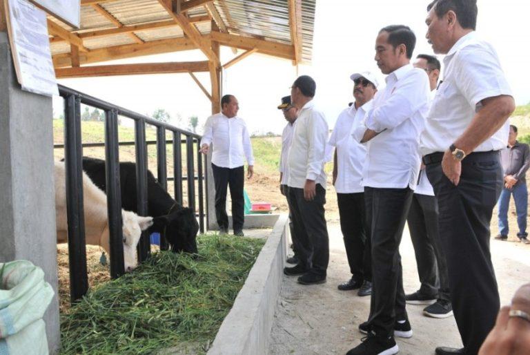 Jokowi Berencana Ambil Alih Tanah Konsesi yang Terlantar di Kawasan Toba