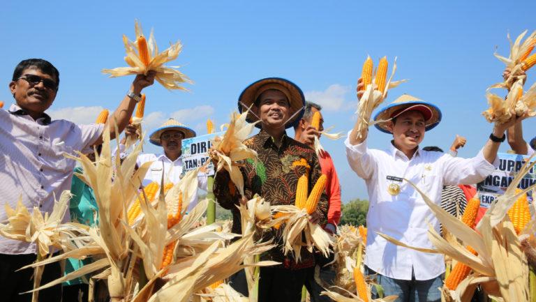 Produksi Jagung di Nganjuk Diklaim Raup Rp 1 Triliun
