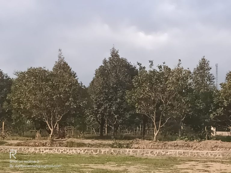 Lombok Barat Siap jadi Kawasan Korporasi Durian