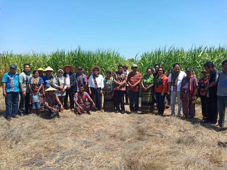 Kementan: Target Membangun 10 Pabrik Gula Tercapai