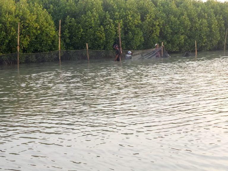 Penanganan Optimal Pertamina: Penutupan Sumur YYA-1 Sampai Pemulihan Lingkungan