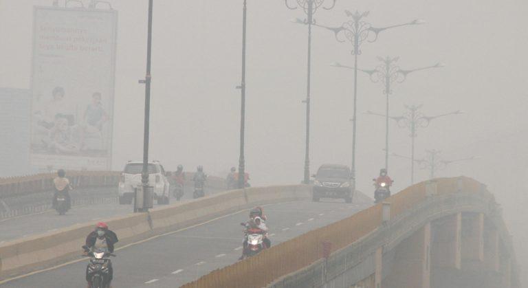Presiden Jokowi Diminta Tinjau Langsung Bencana Kabut Asap di Riau