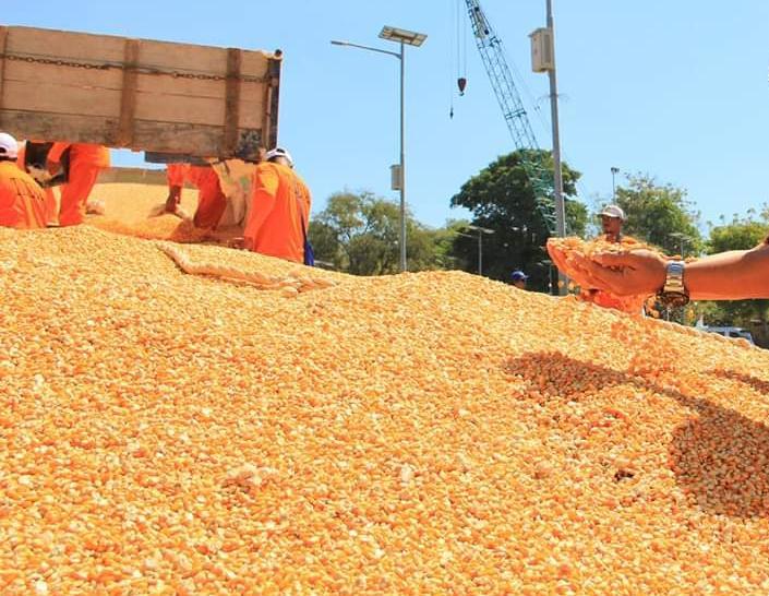 Kementan tegaskan tak ada toleransi bagi pihak yang mempermainkan benih jagung