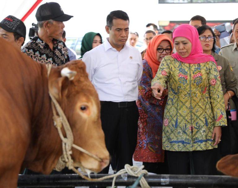 Jawa Timur Siap jadi Role Model Peningkatan Jumlah Populasi Sapi di Indonesia