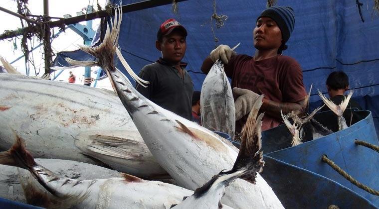 Anomali Impor Ikan