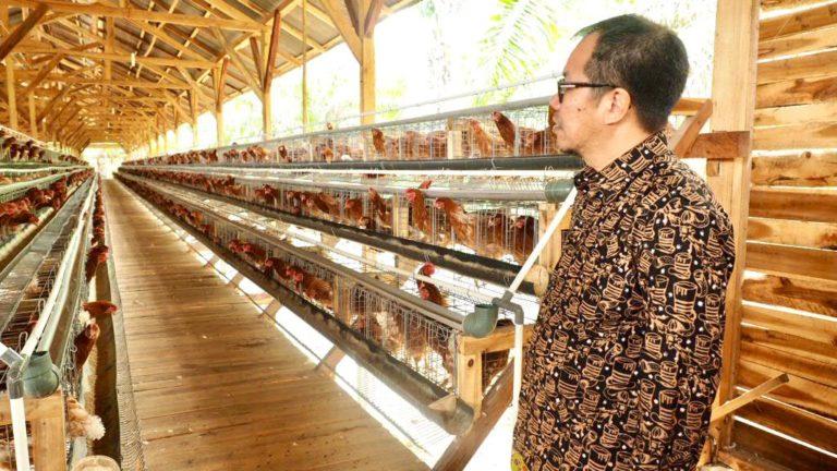 LPDB Bakal Kucurkan Dana Bergulir untuk Perternak Ayam di Lampung
