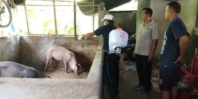 Pemda Bali dan Kementan Tangani Kasus Kematian Babi