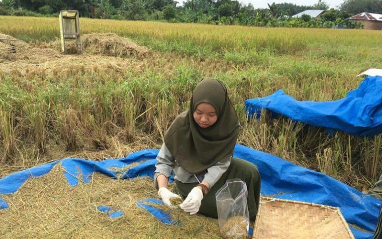 Pastikan Keamanan Produk, Kementan Pantau Kadar Residu Pestisida Pada Beras