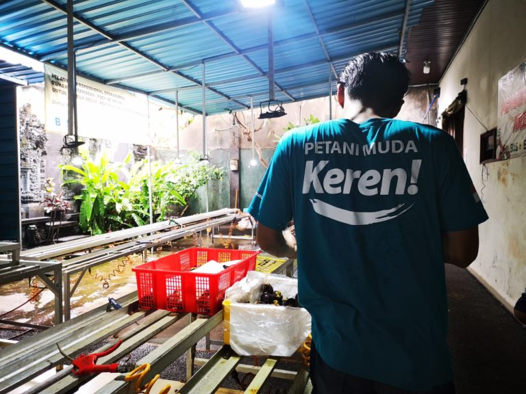 Petani Muda Bali Peroleh Omset Ekspor Hingga 100 M Lewat Market Place Digital