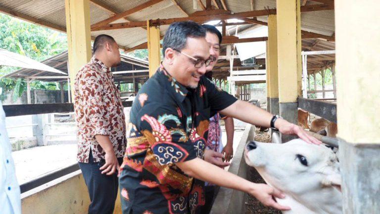 LPDB Siap Salurkan Dana Bergulir untuk Peternak Sapi Lampung