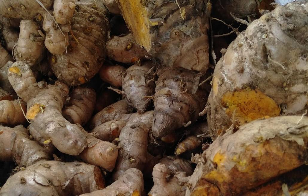 Temulawak Jahe Dan Kunyit Produk Pertanian Yang Dekat Dengan Kesehatan Monitor