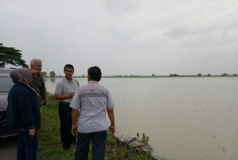 Bantuan 67,7 Ton Benih untuk Petani Indramayu Segera Disalurkan