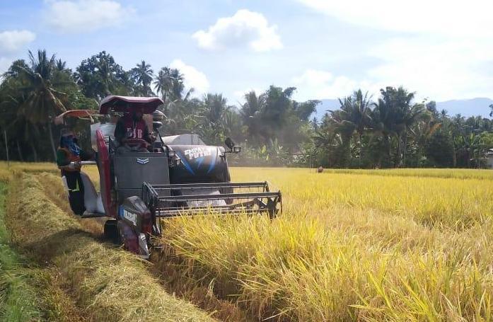 Petani Banten Panen Raya Surplus Beras 160.132 Ton di Tengah Pandemi Covid-19