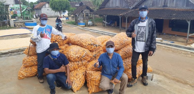 Di Tengah Pandemi Covid-19, Tuban Panen Benih Jagung Hibrida Hingga 850 Ton
