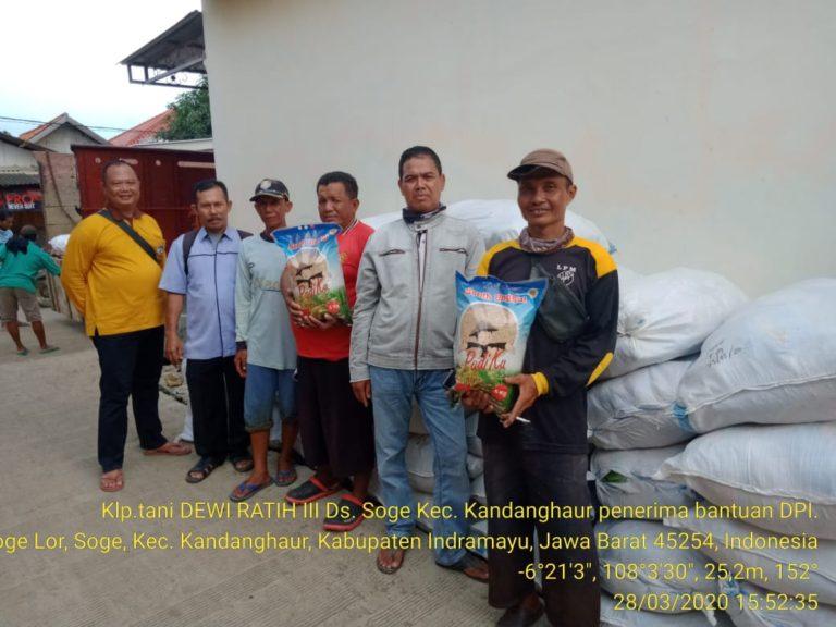 2.708 Hektar Lahan Terdampak Banjir Indramayu Dapat Bantuan Benih Kementan