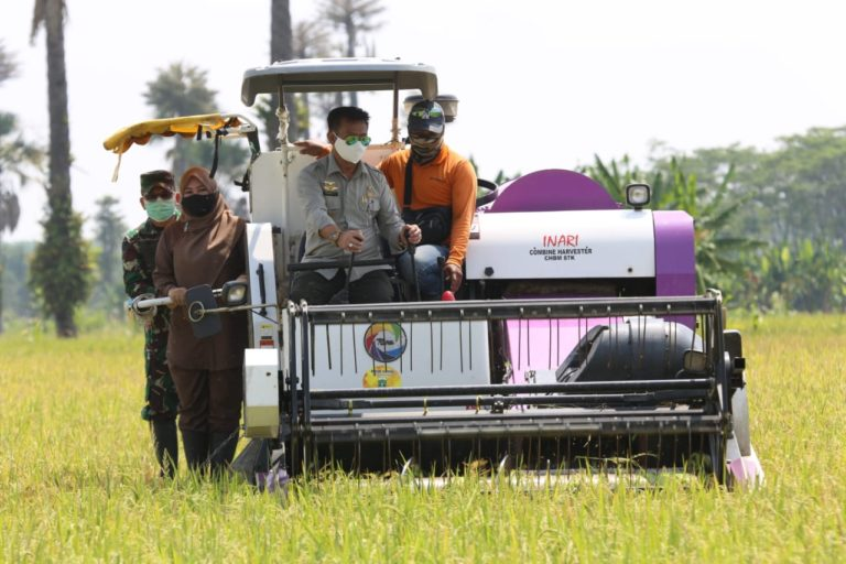 Triwulan I, PDB Pertanian Tercatat Alami Kenaikan