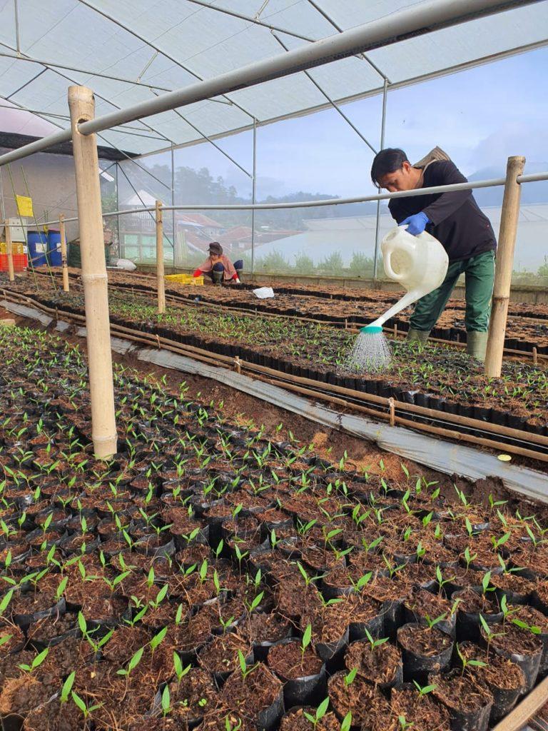Penjualan Produk Petani Binaan Ponpes Al-Ittifaq Meningkat di Tengah Pandemi Covid – 19