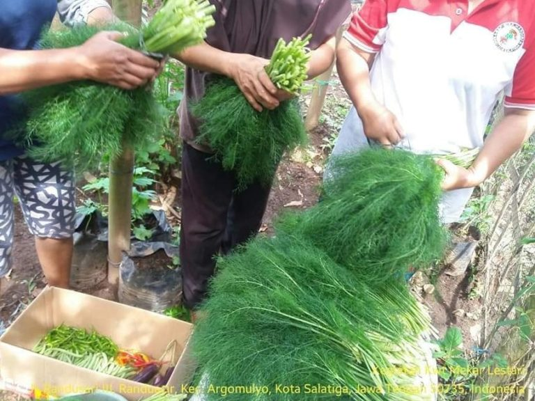 KWT Salatiga Sulap Pekarangan Jadi Lumbung Pangan di Tengah Pandemi Covid-19
