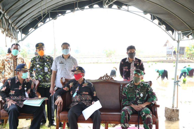 Jadi Sentra Jagung, Bupati Fathul Huda: Tuban Siap Mandiri Benih