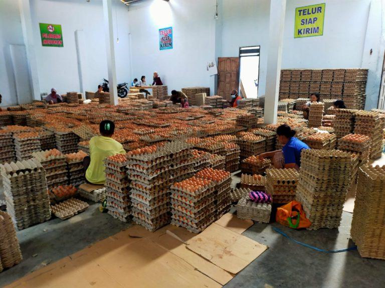 Peternak Blitar Gandeng PT. Berdikari Distribusikan Telur Ayam