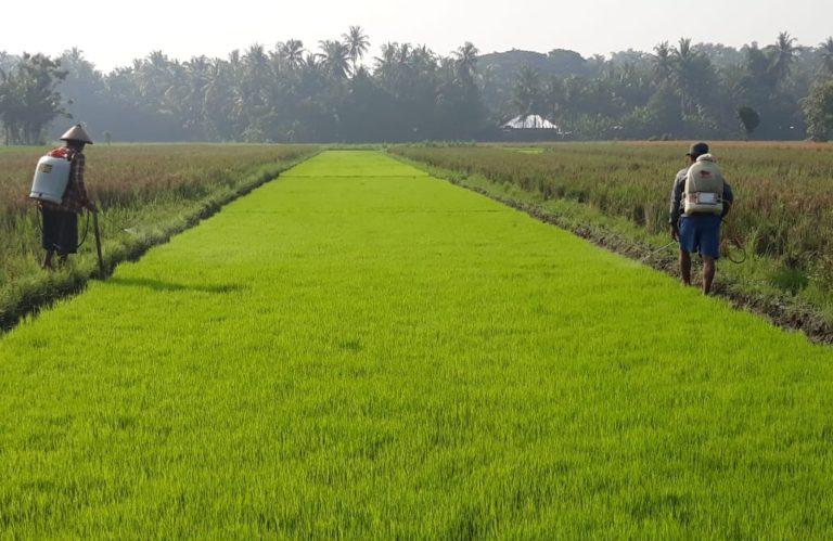 Popmasepi: Produksi Pertanian Indonesia Semakin Baik, Jadi tidak Perlu Impor