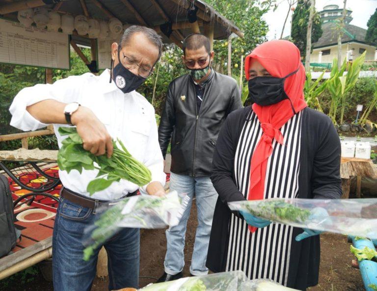 Produk Pekarangan Pangan di Cibodas Dongkrak Pendapatan Petani