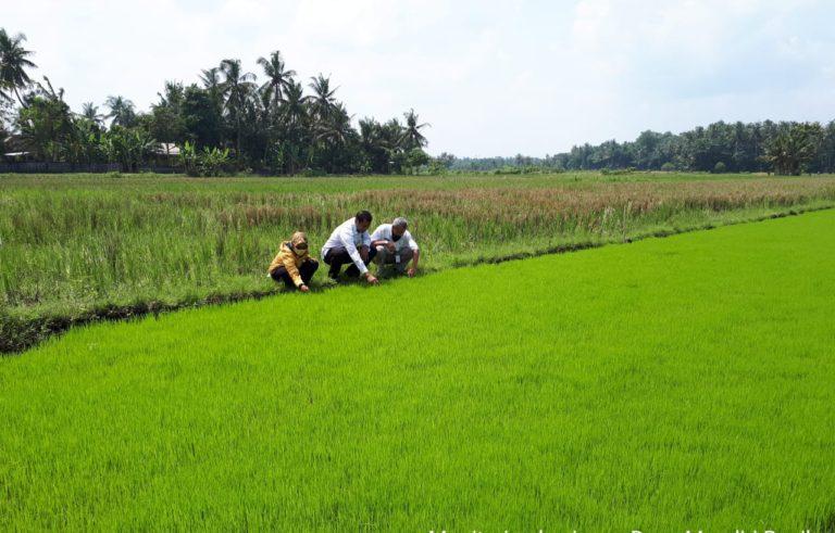 PBT Sumsel Aktif di Lapangan Pastikan Mutu Bantuan Benih Terjamin