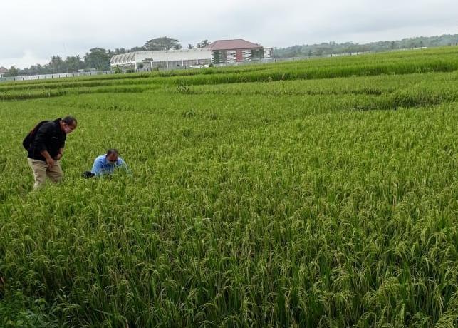 Bupati Kulon Progo: Stok Pangan Kulonprogo Aman Sampai Akhir Tahun 2020